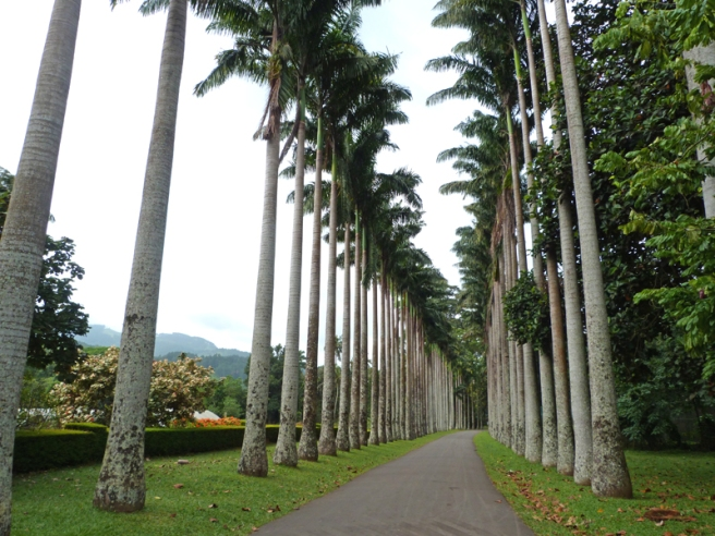 kandy_palm_avenue
