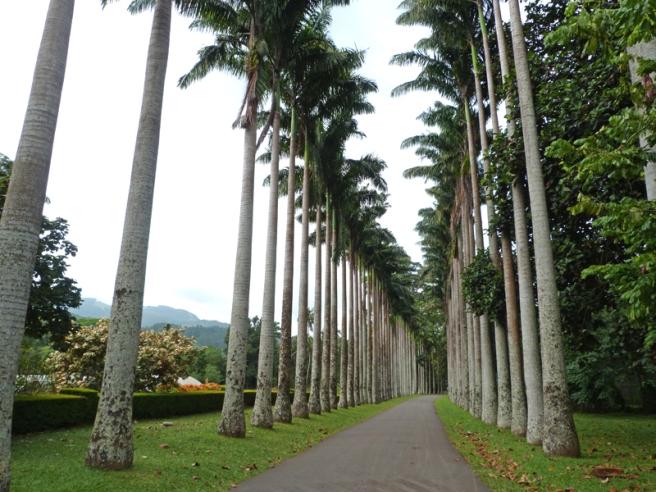 kandy_palm_avenue