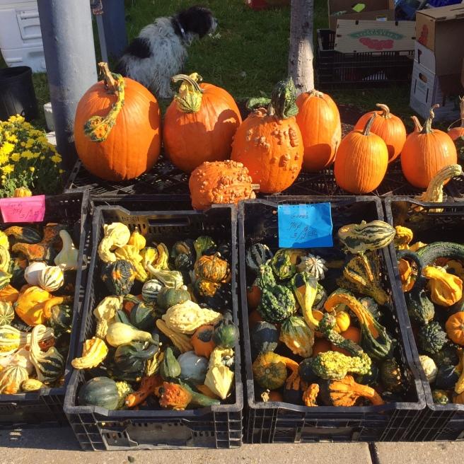 dupont_circle_farmers_market_pumpkins