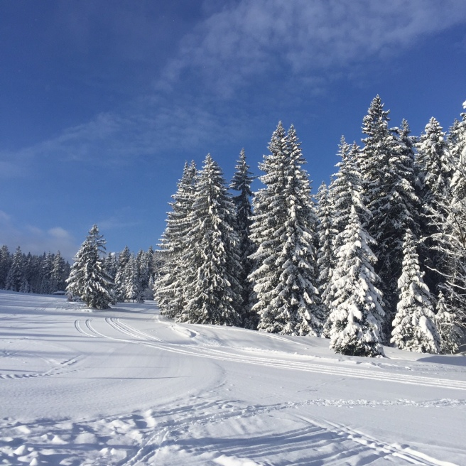 skiing_garmisch_trees