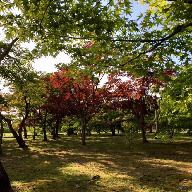 okayama_korakuen_garden_1