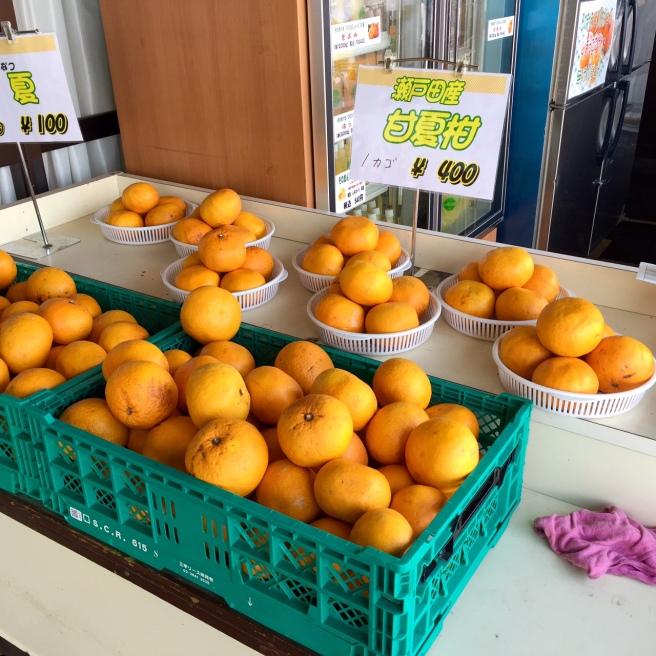 shimanami_kaido_cycling_citrus_shop_2