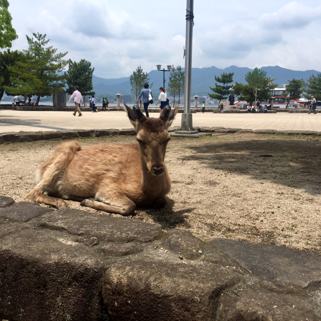 miyajima_deer