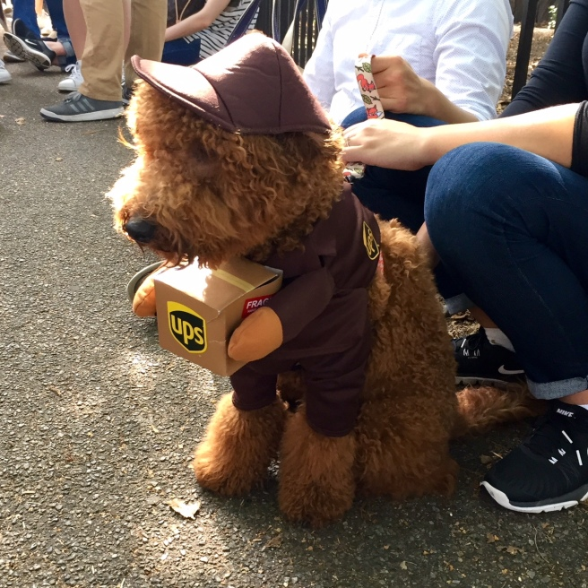 NYC_halloween_doggy_parade_2