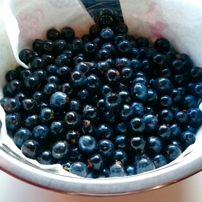 sloe_berries